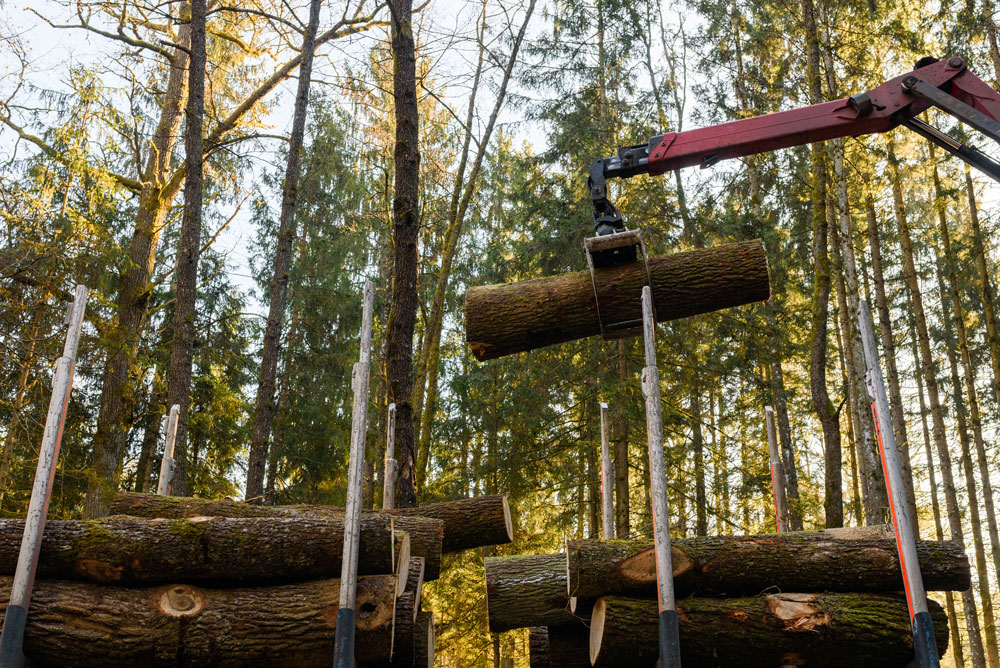 crane-in-forest-loading-logs-in-the-truck-timber-h-LKWX6QN